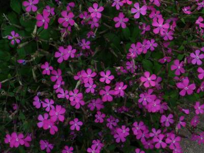 Va de flors