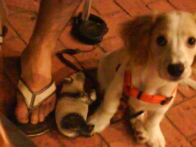 El gos d'Ulisses...